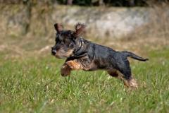 Emma fliegender Hund
